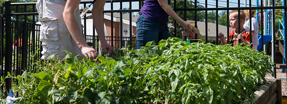 The community garden at the YWCA homeless shelter