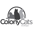 Love cats? Help clean the Colony Cats Adoption Center!