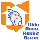 Hop to it and Socialize with Rescued Bunnies!